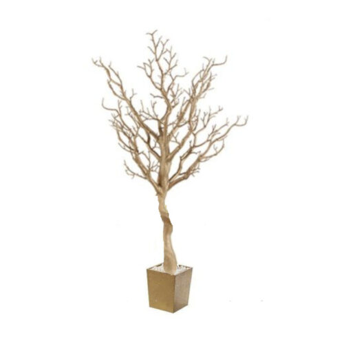 CATALINA ROSE GOLD MANZANITA TREE